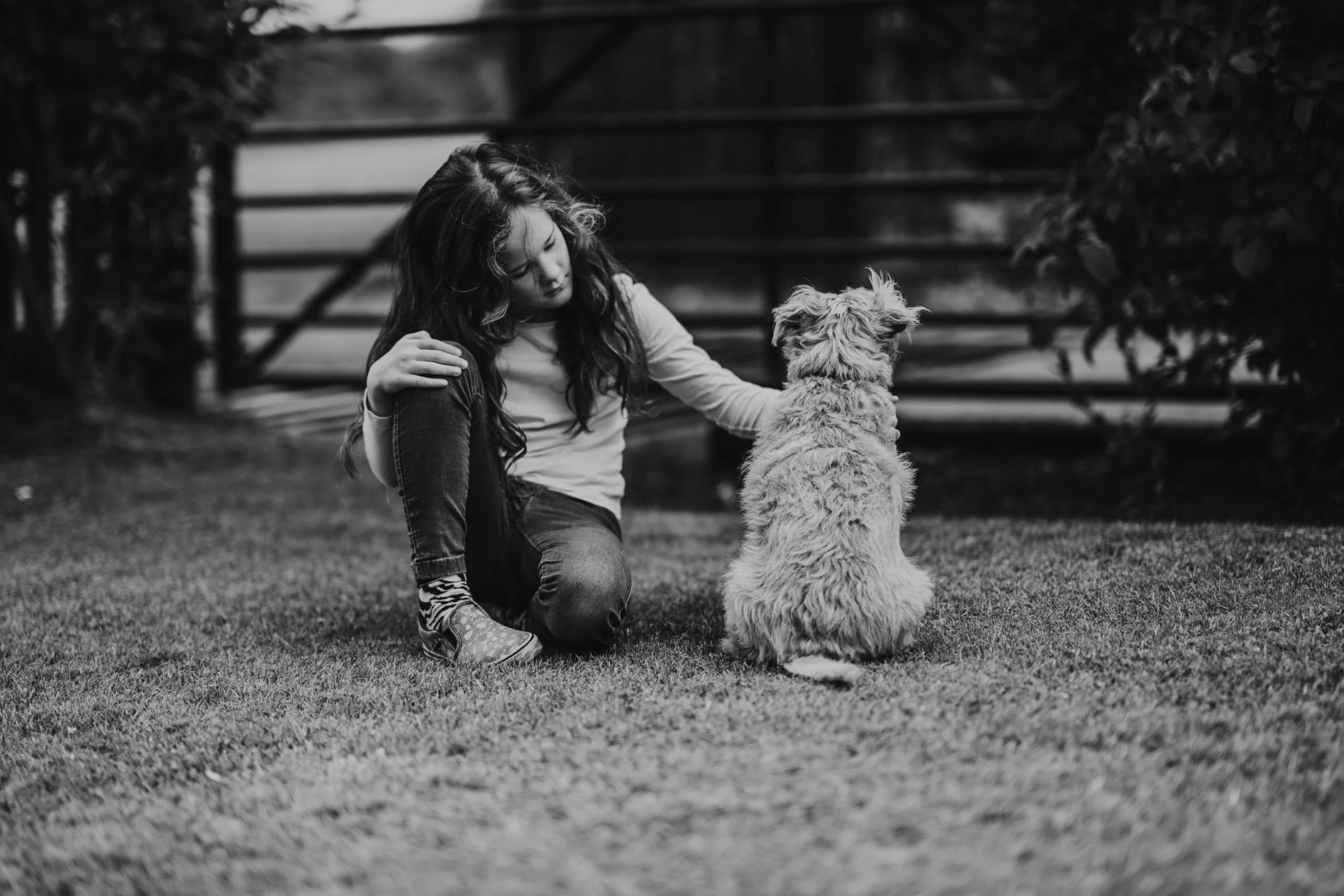 Who Gets Custody of Your Pets in a Separation?